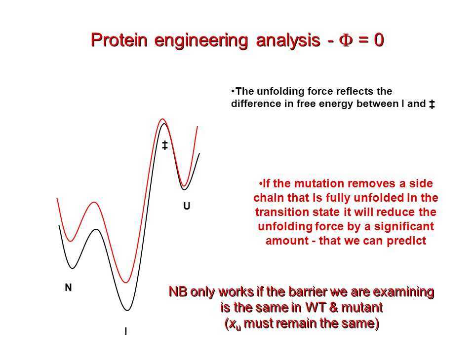 Protein engineering analysis -  = 0 N I ‡ If the mutation removes a side chain that is fully unfolded in the transition state it will reduce the unfolding force by a significant amount - that we can predict U The unfolding force reflects the difference in free energy between I and ‡ NB only works if the barrier we are examining is the same in WT & mutant (x u must remain the same) NB only works if the barrier we are examining is the same in WT & mutant (x u must remain the same)