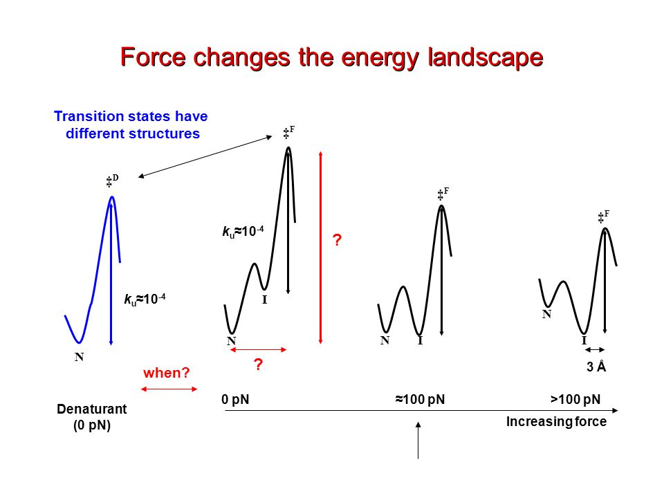 Increasing force 0 pN>100 pN≈100 pN N N N I I I ‡F‡F N ‡D‡D ‡F‡F ‡F‡F k u ≈10 -4 Denaturant (0 pN) Force changes the energy landscape Transition states have different structures 3 Å .