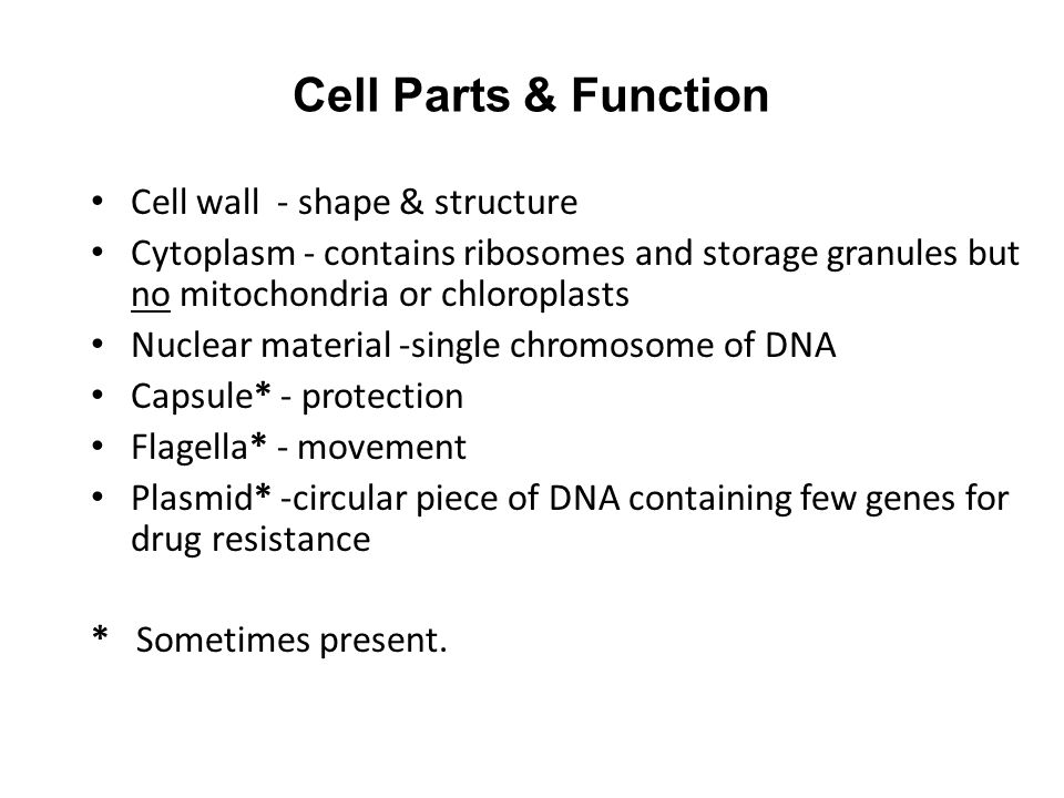 Cell Parts & Function Cell wall - shape & structure Cytoplasm - contains ribosomes and storage granules but no mitochondria or chloroplasts Nuclear ma