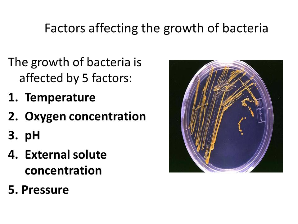 Factors affecting the growth of bacteria The growth of bacteria is affected by 5 factors: 1.Temperature 2.Oxygen concentration 3.pH 4.External solute