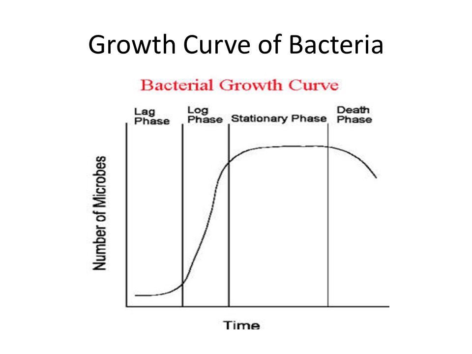 Growth Curve of Bacteria