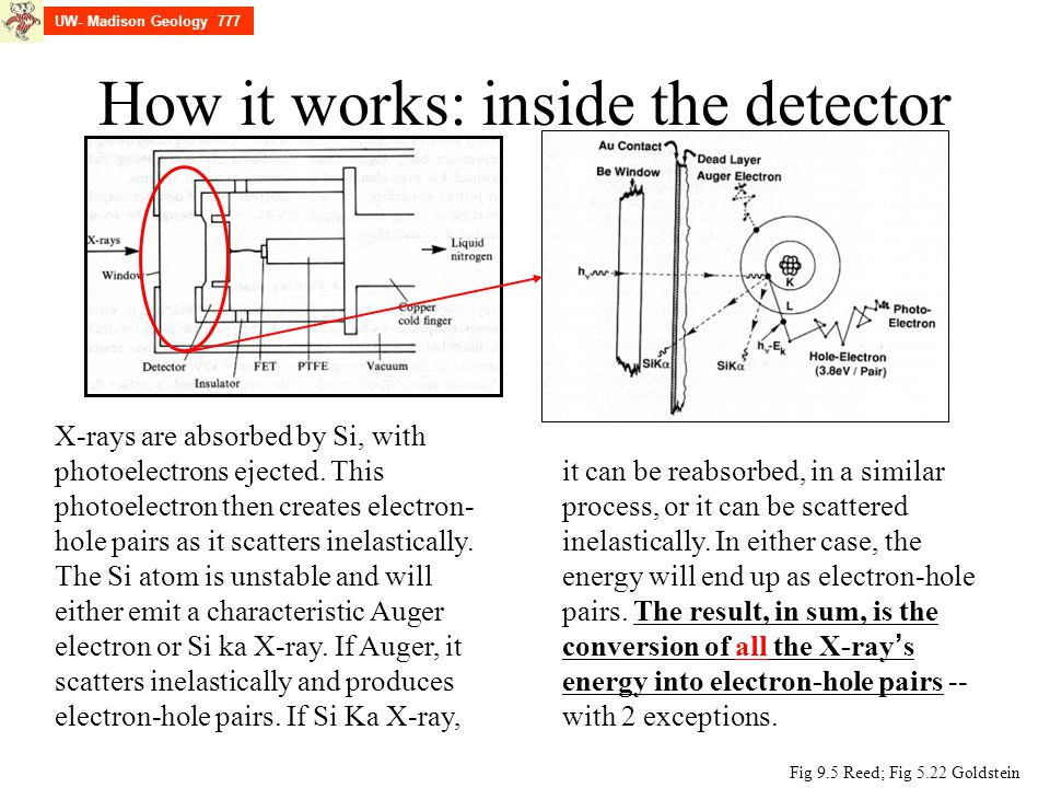 How it works: inside the detector Fig 9.5 Reed; Fig 5.22 Goldstein X-rays are absorbed by Si, with photoelectrons ejected. This photoelectron then cre