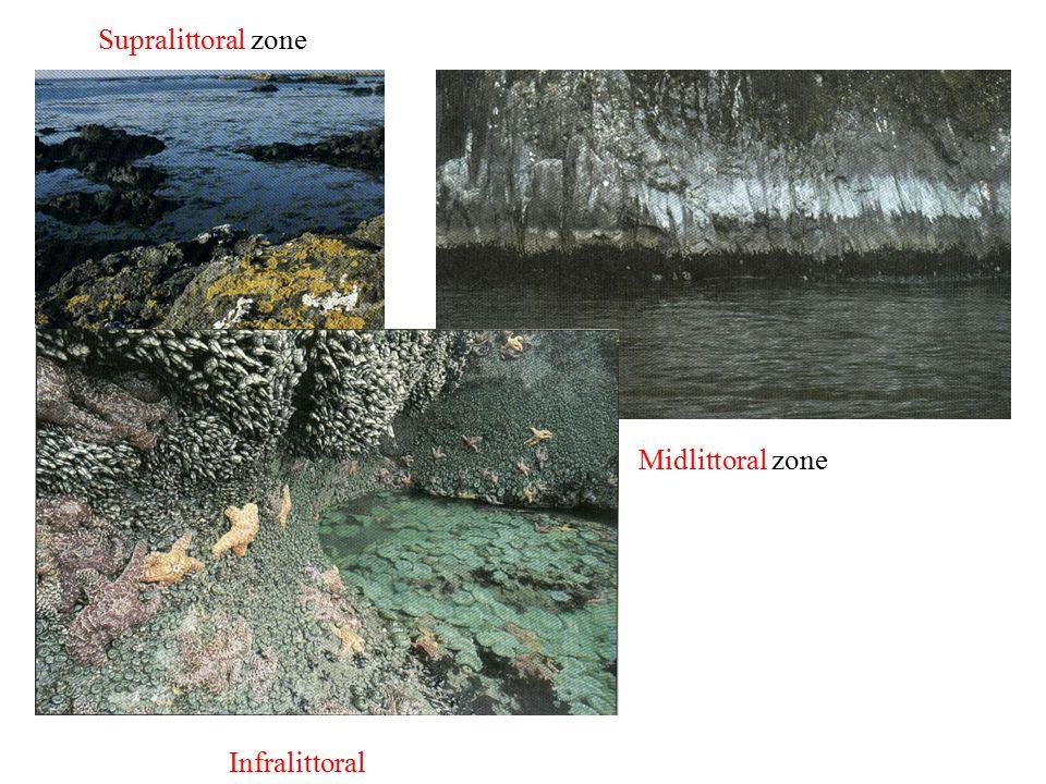 Supralittoral zone Midlittoral zone Infralittoral