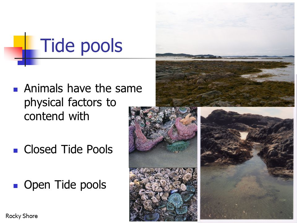 Rocky Shore21 Tide pools Animals have the same physical factors to contend with Closed Tide Pools Open Tide pools