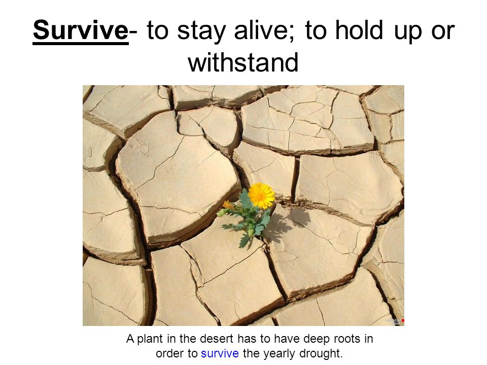 Survive- to stay alive; to hold up or withstand A plant in the desert has to have deep roots in order to survive the yearly drought.