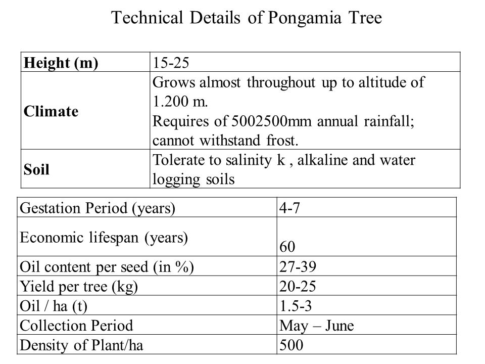 Technical Details of Pongamia Tree Height (m)15-25 Climate Grows almost throughout up to altitude of 1.200 m.
