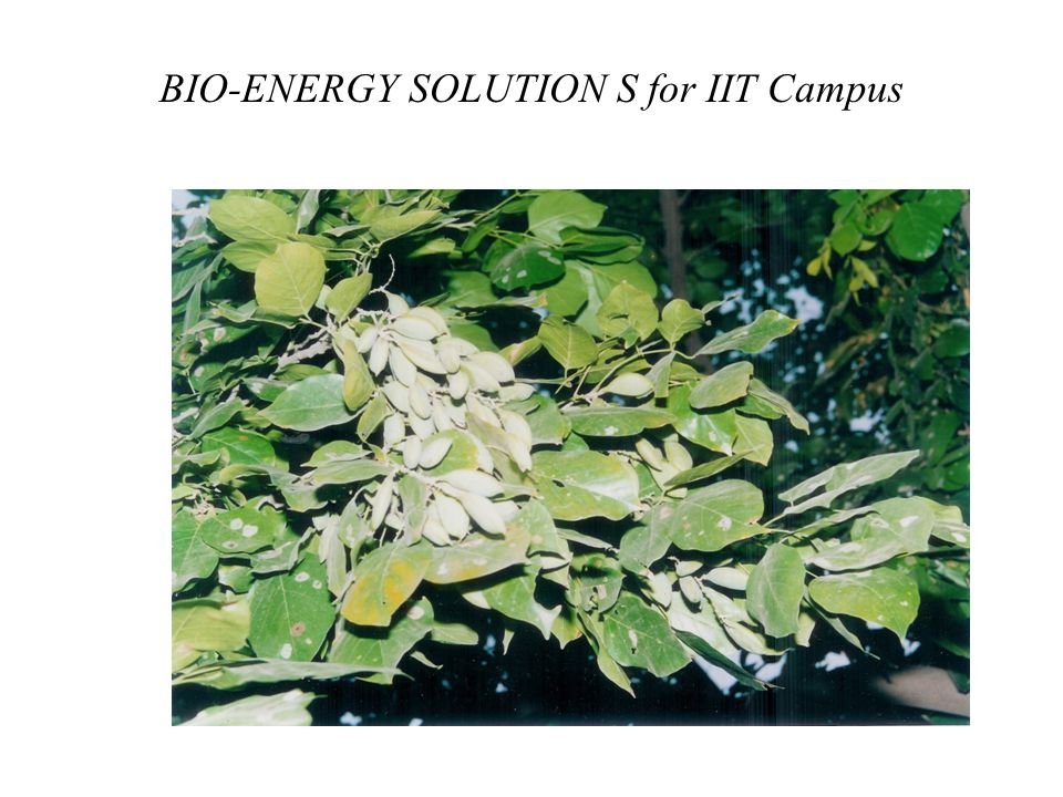 BIO-ENERGY SOLUTION S for IIT Campus