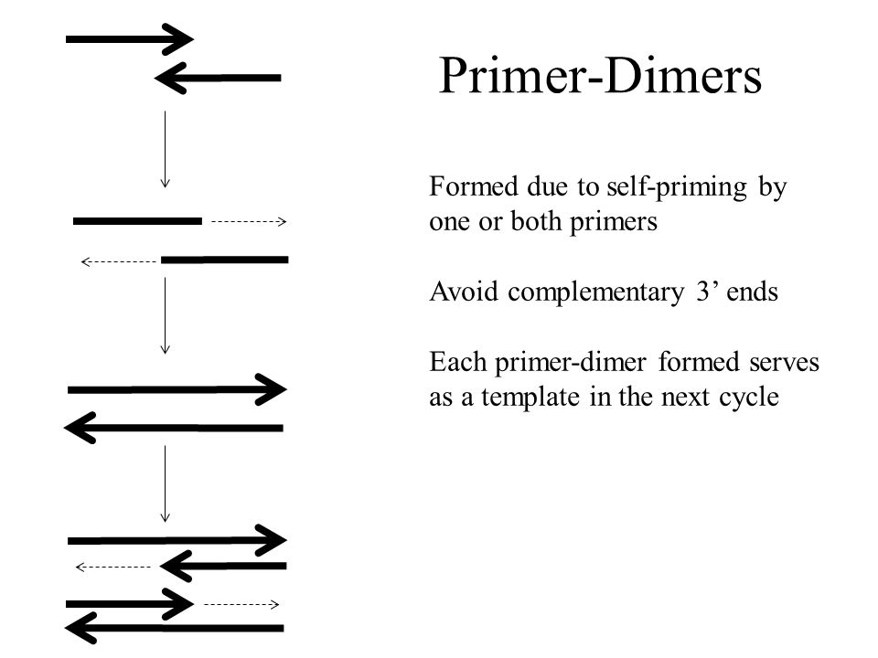 Primer-Dimers Formed due to self-priming by one or both primers Avoid complementary 3' ends Each primer-dimer formed serves as a template in the next cycle