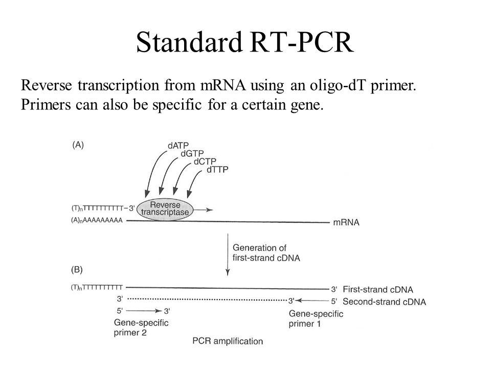 Standard RT-PCR Reverse transcription from mRNA using an oligo-dT primer. Primers can also be specific for a certain gene.