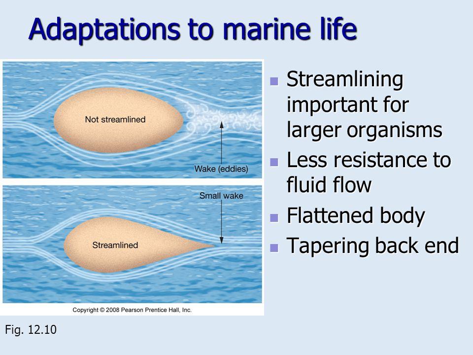 Adaptations to marine life Streamlining important for larger organisms Streamlining important for larger organisms Less resistance to fluid flow Less