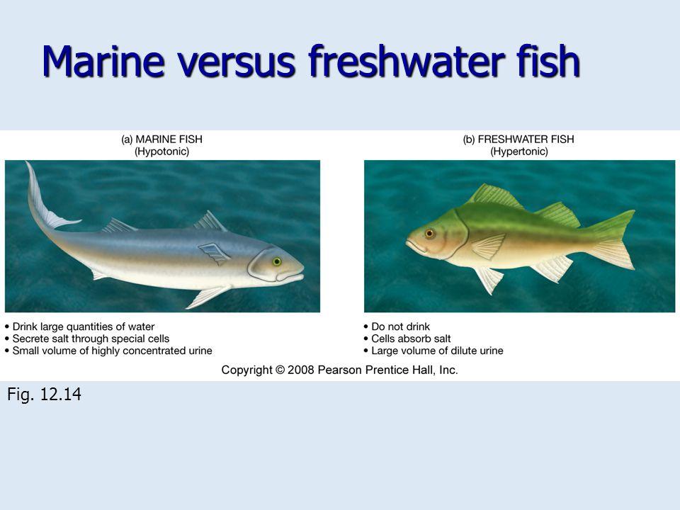 Marine versus freshwater fish Fig. 12.14