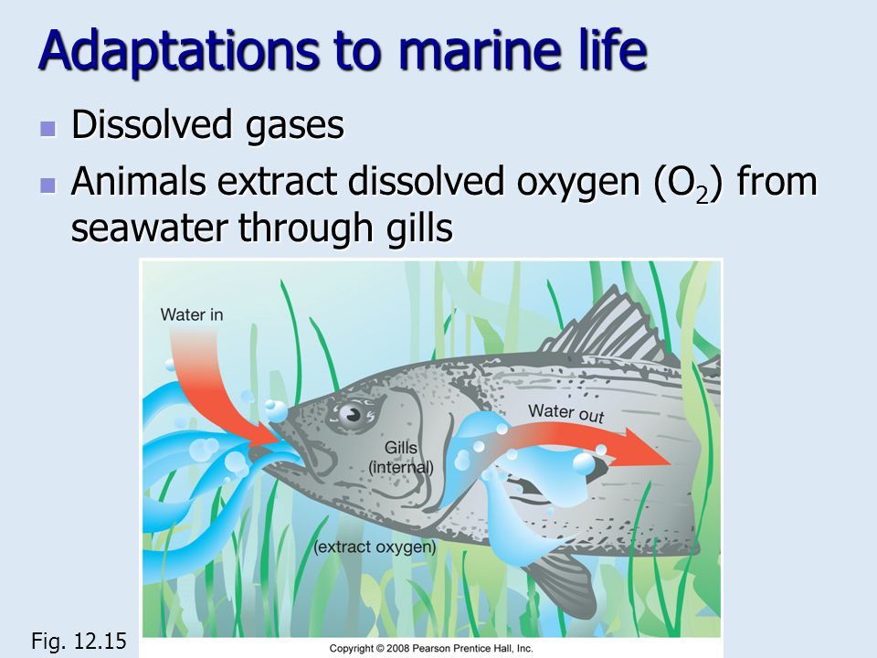 Adaptations to marine life Dissolved gases Dissolved gases Animals extract dissolved oxygen (O 2 ) from seawater through gills Animals extract dissolv