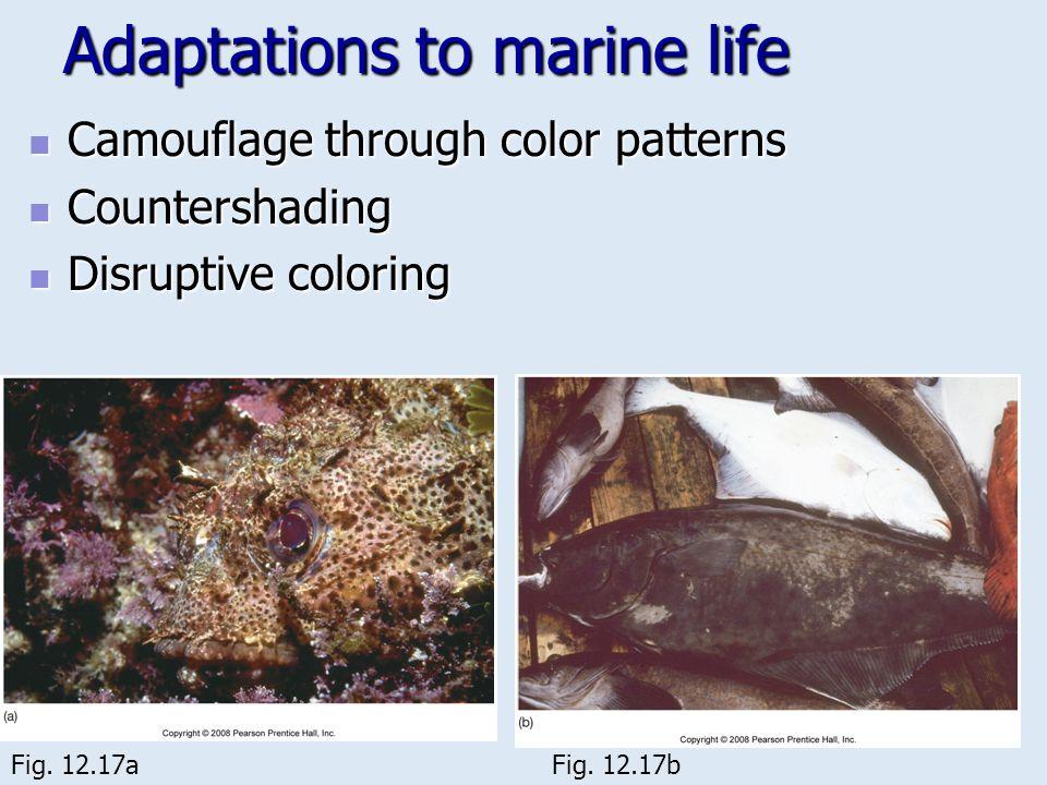 Adaptations to marine life Camouflage through color patterns Camouflage through color patterns Countershading Countershading Disruptive coloring Disru