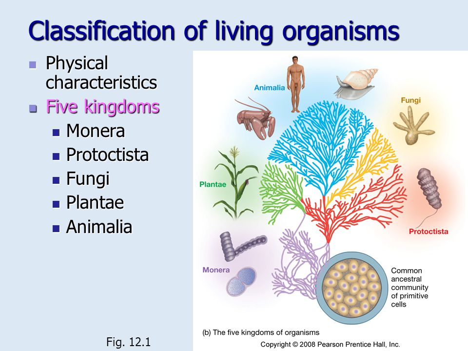 Classification of living organisms Physical characteristics Physical characteristics Five kingdoms Five kingdoms Monera Monera Protoctista Protoctista