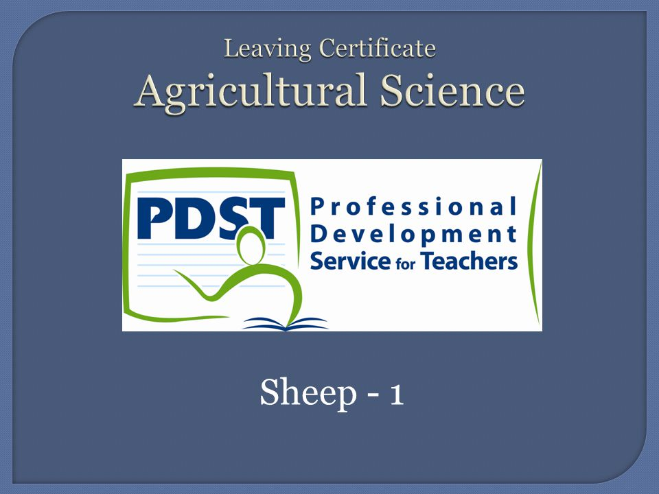 Sheep - 1