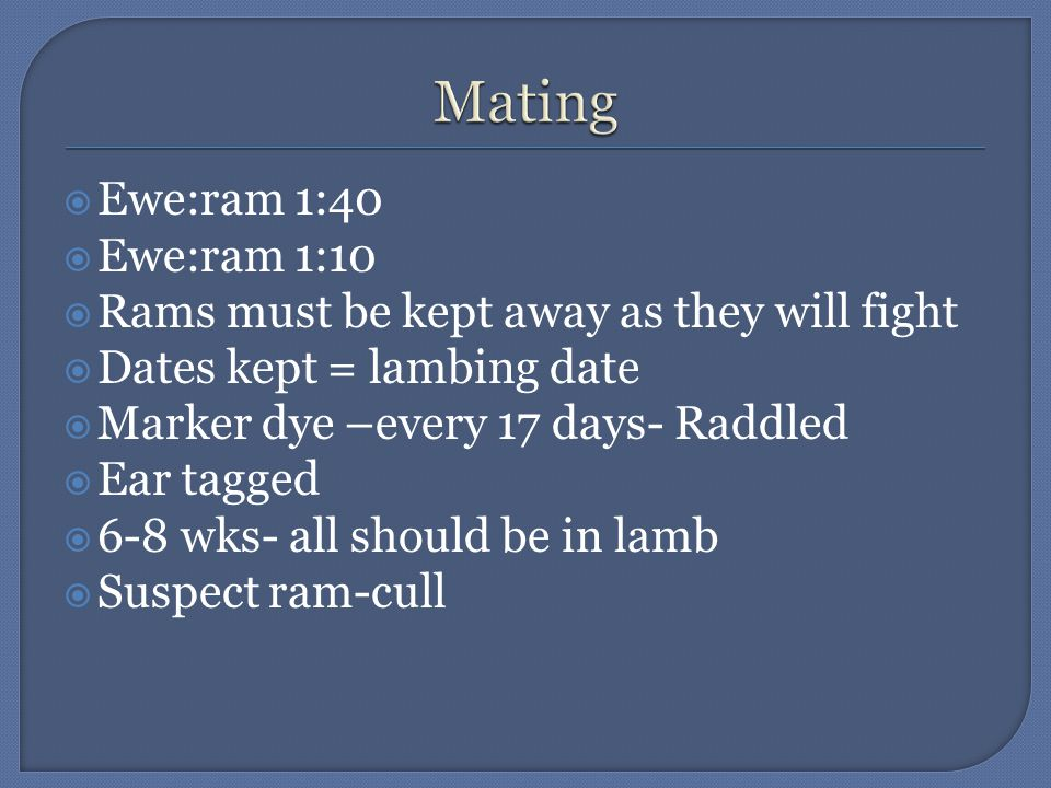  Ewe:ram 1:40  Ewe:ram 1:10  Rams must be kept away as they will fight  Dates kept = lambing date  Marker dye –every 17 days- Raddled  Ear tagged  6-8 wks- all should be in lamb  Suspect ram-cull