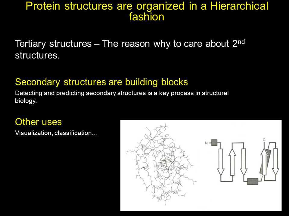Protein structures are organized in a Hierarchical fashion Tertiary structures – The reason why to care about 2 nd structures. Secondary structures ar