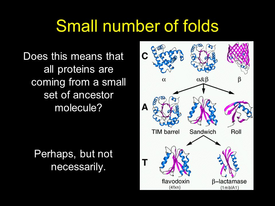 Small number of folds Does this means that all proteins are coming from a small set of ancestor molecule? Perhaps, but not necessarily.