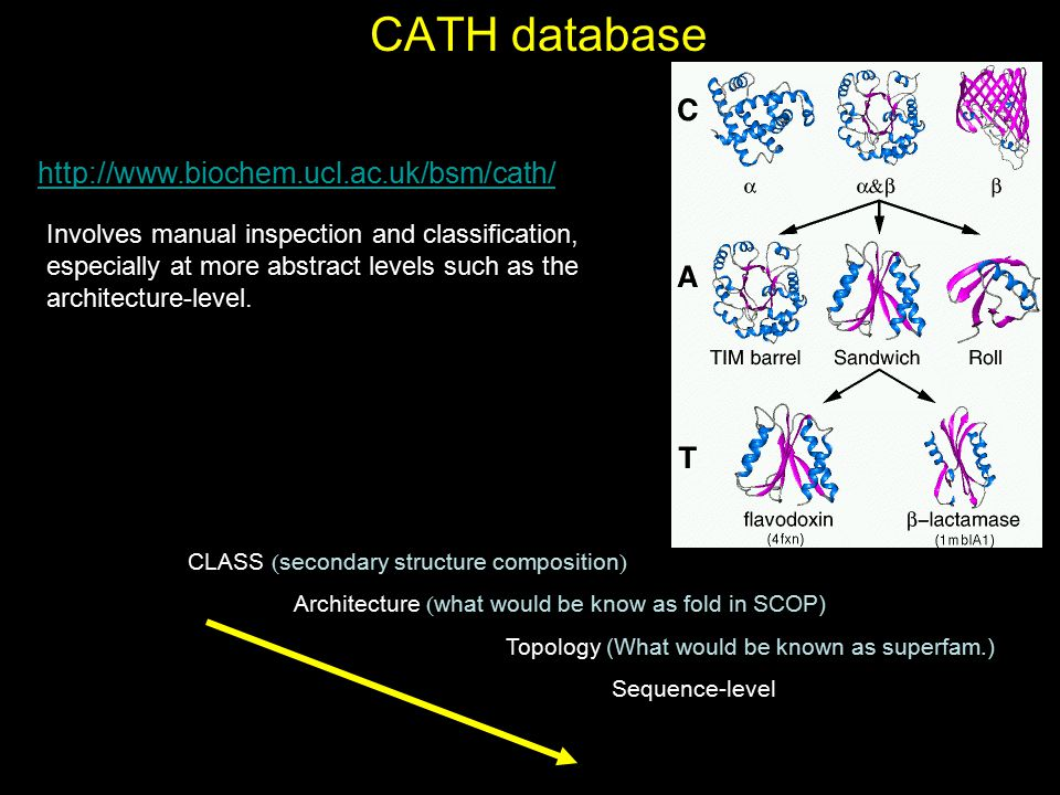 CATH database http://www.biochem.ucl.ac.uk/bsm/cath/ Involves manual inspection and classification, especially at more abstract levels such as the arc