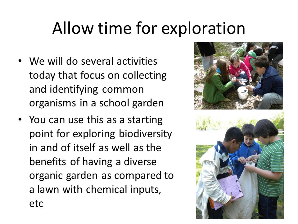 Allow time for exploration We will do several activities today that focus on collecting and identifying common organisms in a school garden You can use this as a starting point for exploring biodiversity in and of itself as well as the benefits of having a diverse organic garden as compared to a lawn with chemical inputs, etc