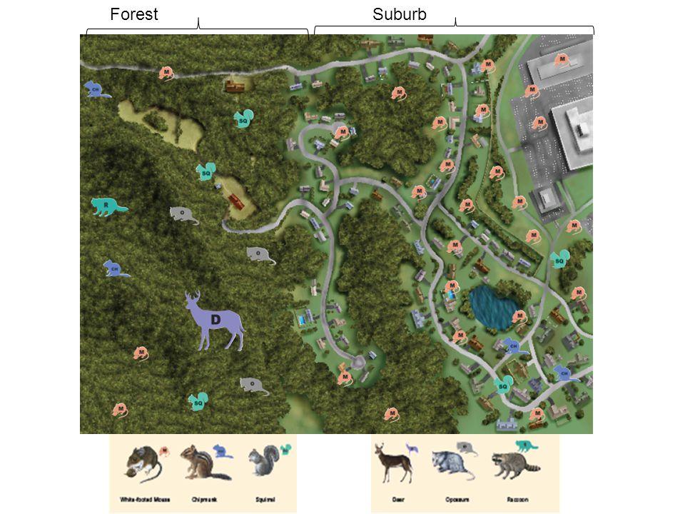 ForestSuburb