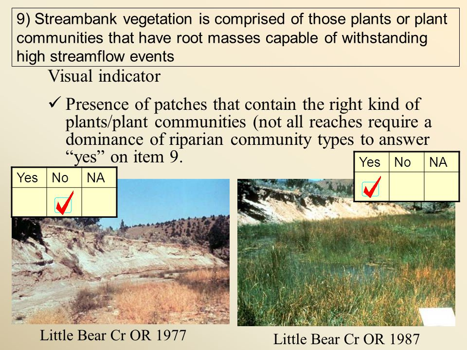 Little Bear Cr OR 1977 Little Bear Cr OR 1987 9) Streambank vegetation is comprised of those plants or plant communities that have root masses capable of withstanding high streamflow events Visual indicator Presence of patches that contain the right kind of plants/plant communities (not all reaches require a dominance of riparian community types to answer yes on item 9.