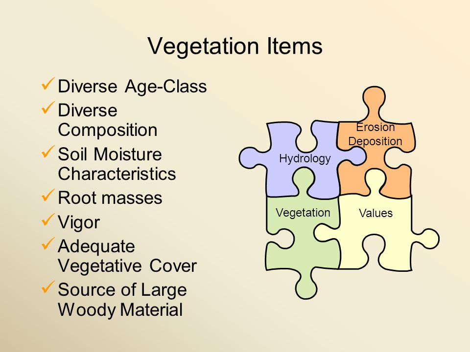 Vegetation Items Diverse Age-Class Diverse Composition Soil Moisture Characteristics Root masses Vigor Adequate Vegetative Cover Source of Large Woody Material Values Hydrology Vegetation Erosion Deposition