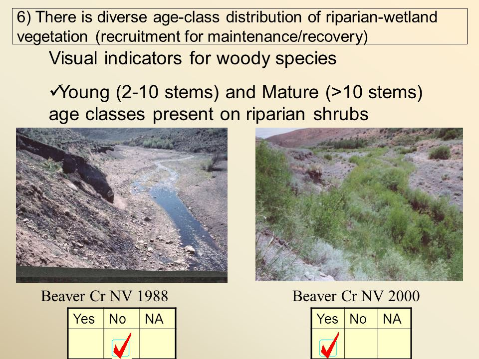 Beaver Cr NV 1988Beaver Cr NV 2000 Visual indicators for woody species Young (2-10 stems) and Mature (>10 stems) age classes present on riparian shrubs YesNoNA YesNoNA