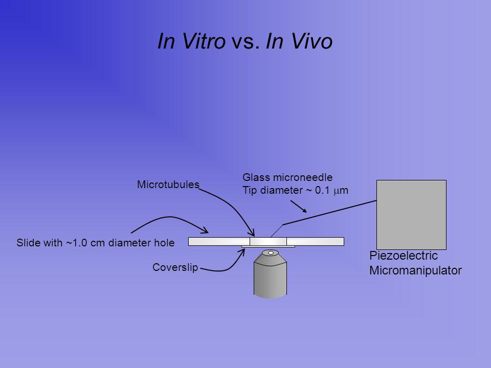 In Vitro vs. In Vivo Piezoelectric Micromanipulator Glass microneedle Tip diameter ~ 0.1  m Slide with ~1.0 cm diameter hole Coverslip Microtubules
