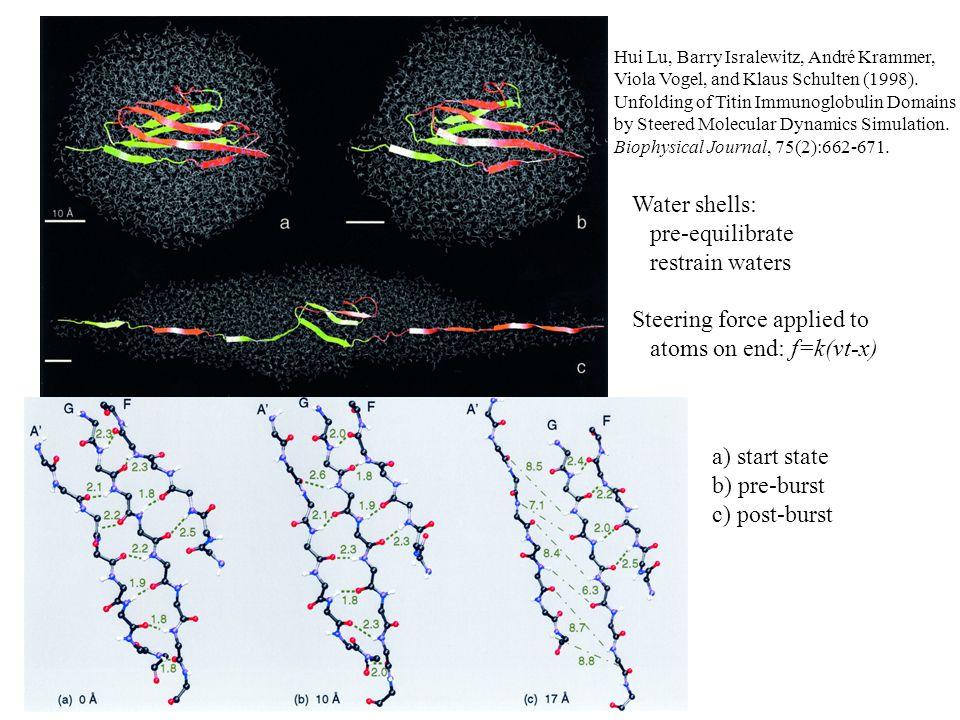 Hui Lu, Barry Isralewitz, André Krammer, Viola Vogel, and Klaus Schulten (1998). Unfolding of Titin Immunoglobulin Domains by Steered Molecular Dynami