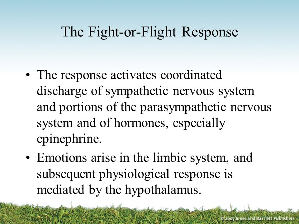 The Fight-or-Flight Response The response activates coordinated discharge of sympathetic nervous system and portions of the parasympathetic nervous sy