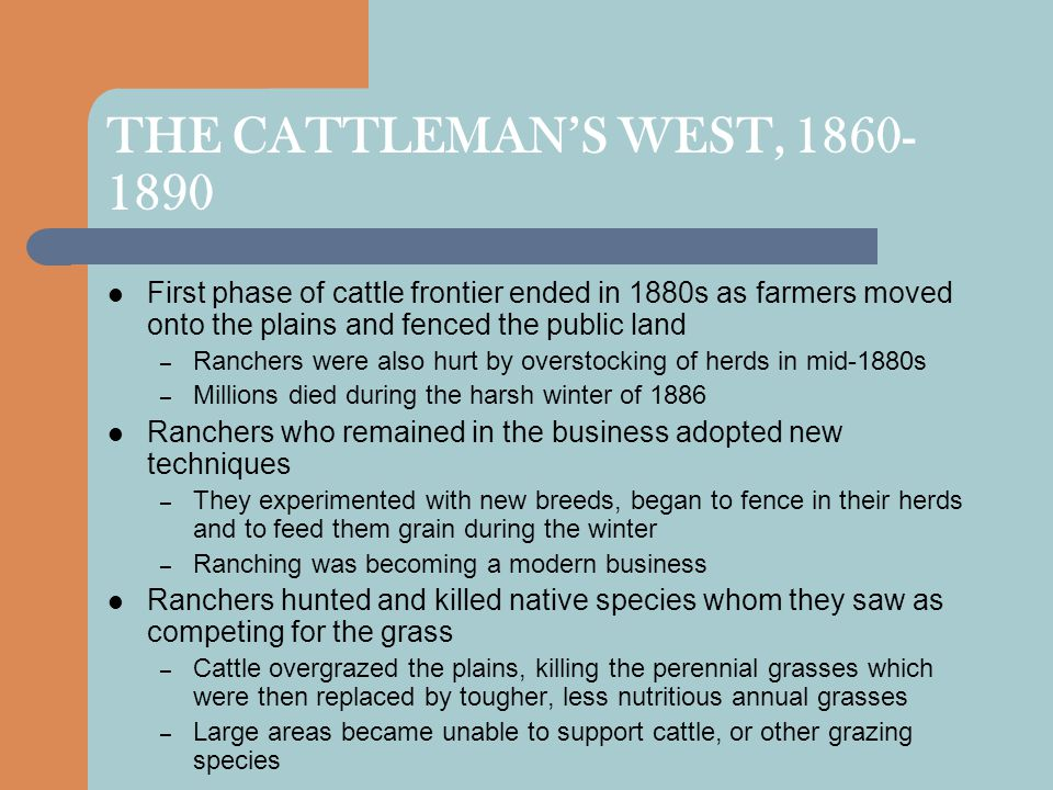 THE CATTLEMAN'S WEST, 1860- 1890 First phase of cattle frontier ended in 1880s as farmers moved onto the plains and fenced the public land – Ranchers were also hurt by overstocking of herds in mid-1880s – Millions died during the harsh winter of 1886 Ranchers who remained in the business adopted new techniques – They experimented with new breeds, began to fence in their herds and to feed them grain during the winter – Ranching was becoming a modern business Ranchers hunted and killed native species whom they saw as competing for the grass – Cattle overgrazed the plains, killing the perennial grasses which were then replaced by tougher, less nutritious annual grasses – Large areas became unable to support cattle, or other grazing species