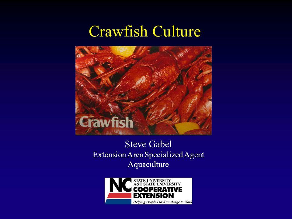 Crawfish Culture Steve Gabel Extension Area Specialized Agent Aquaculture