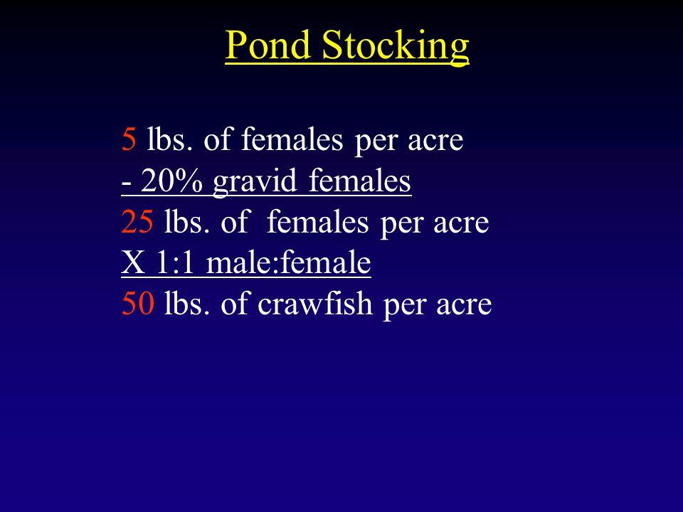 Pond Stocking 5 lbs. of females per acre - 20% gravid females 25 lbs. of females per acre X 1:1 male:female 50 lbs. of crawfish per acre