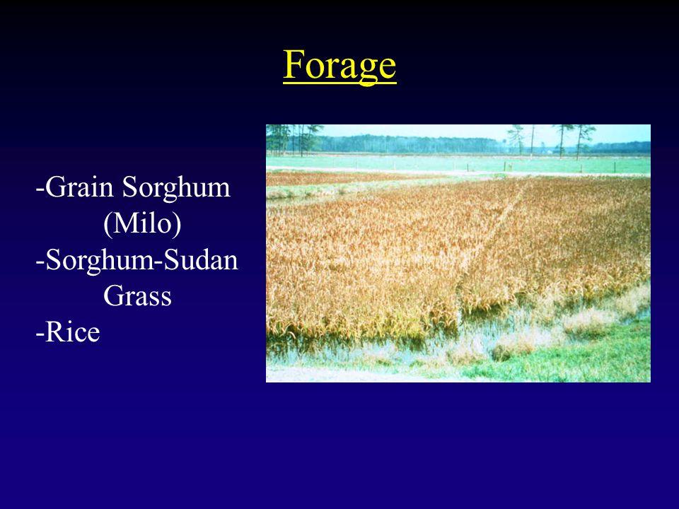 Forage -Grain Sorghum (Milo) -Sorghum-Sudan Grass -Rice