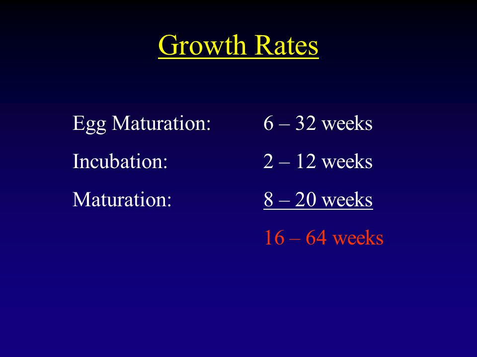 Growth Rates Egg Maturation:6 – 32 weeks Incubation:2 – 12 weeks Maturation:8 – 20 weeks 16 – 64 weeks