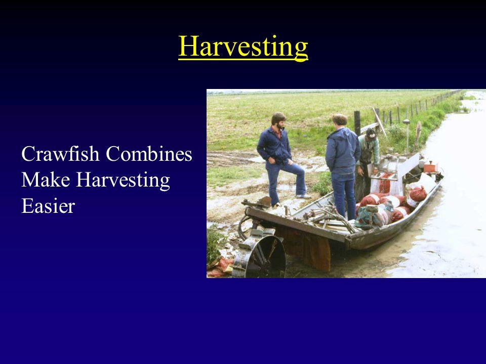 Harvesting Crawfish Combines Make Harvesting Easier