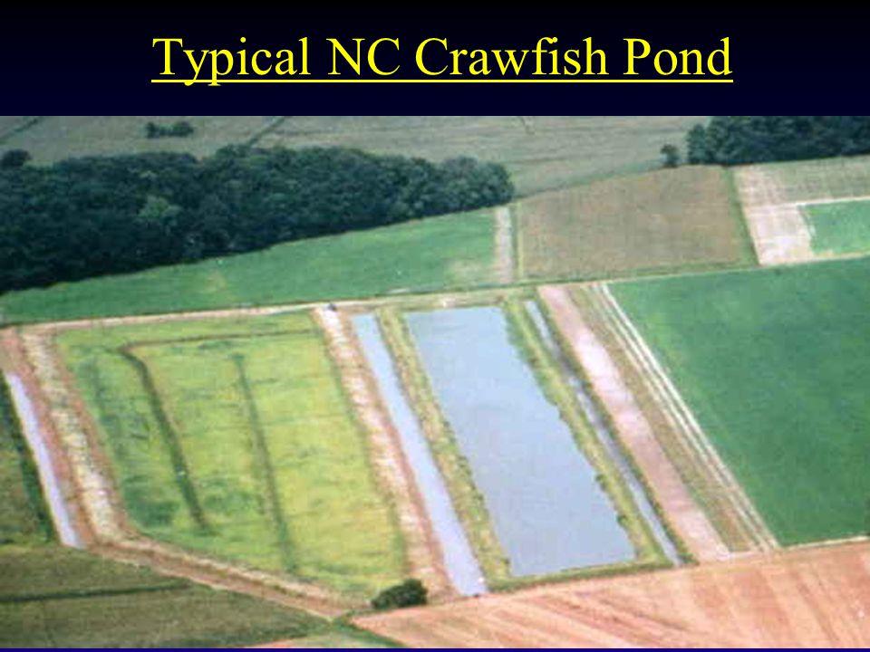 Typical NC Crawfish Pond