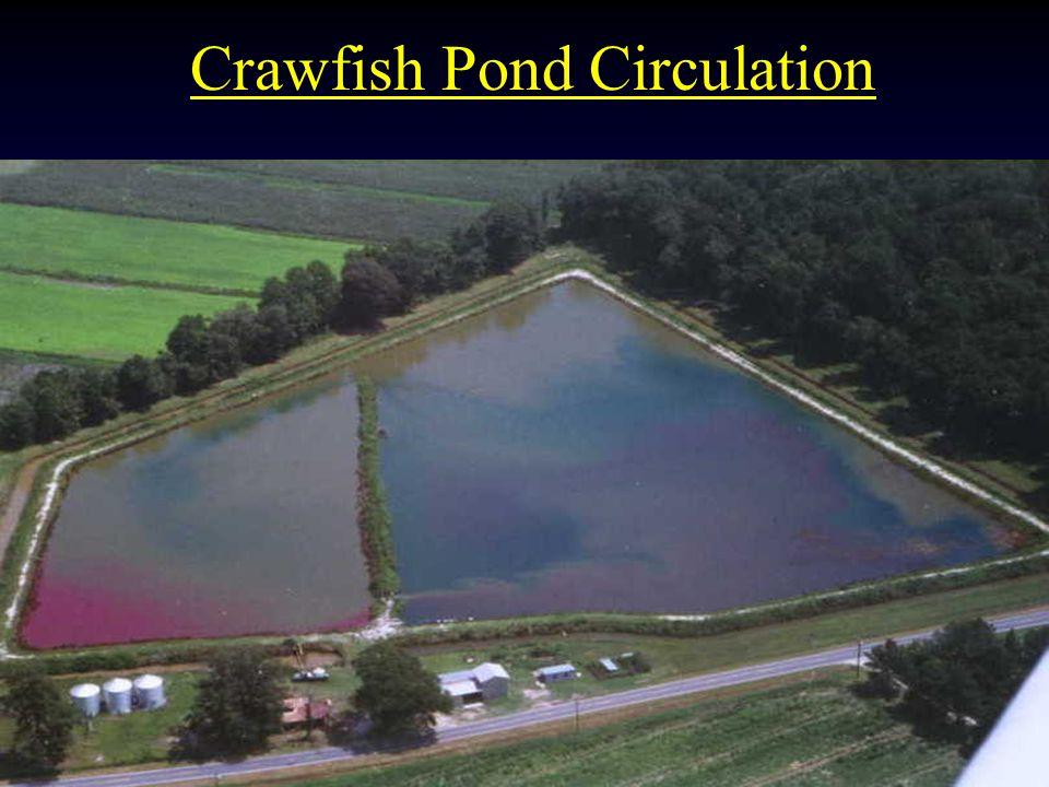 Crawfish Pond Circulation