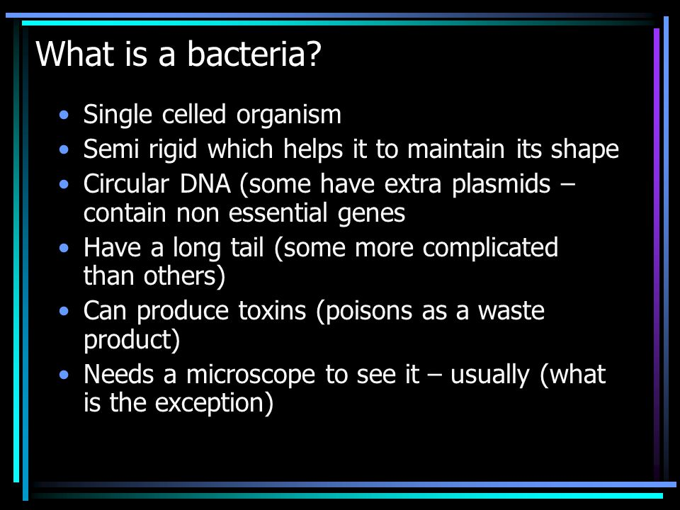 What is a bacteria.