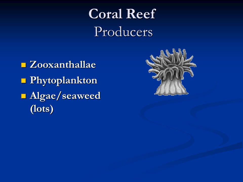 Coral Reef Producers Zooxanthallae Zooxanthallae Phytoplankton Phytoplankton Algae/seaweed (lots) Algae/seaweed (lots)