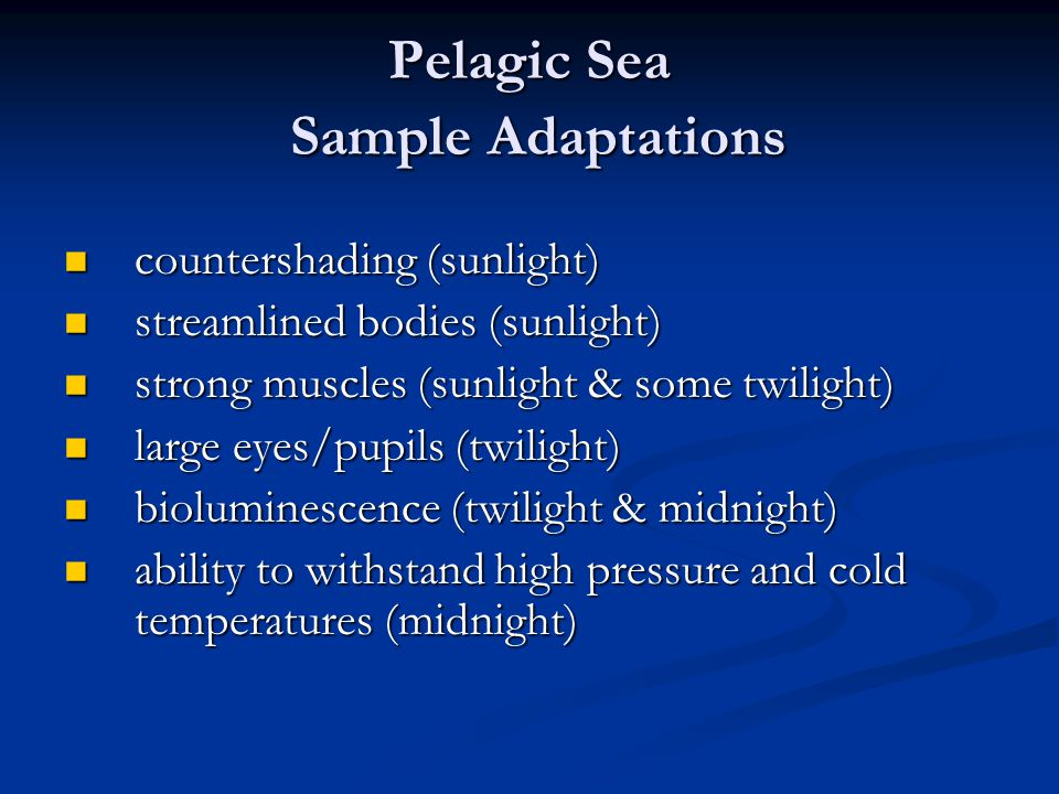 Pelagic Sea Sample Adaptations countershading (sunlight) countershading (sunlight) streamlined bodies (sunlight) streamlined bodies (sunlight) strong muscles (sunlight & some twilight) strong muscles (sunlight & some twilight) large eyes/pupils (twilight) large eyes/pupils (twilight) bioluminescence (twilight & midnight) bioluminescence (twilight & midnight) ability to withstand high pressure and cold temperatures (midnight) ability to withstand high pressure and cold temperatures (midnight)