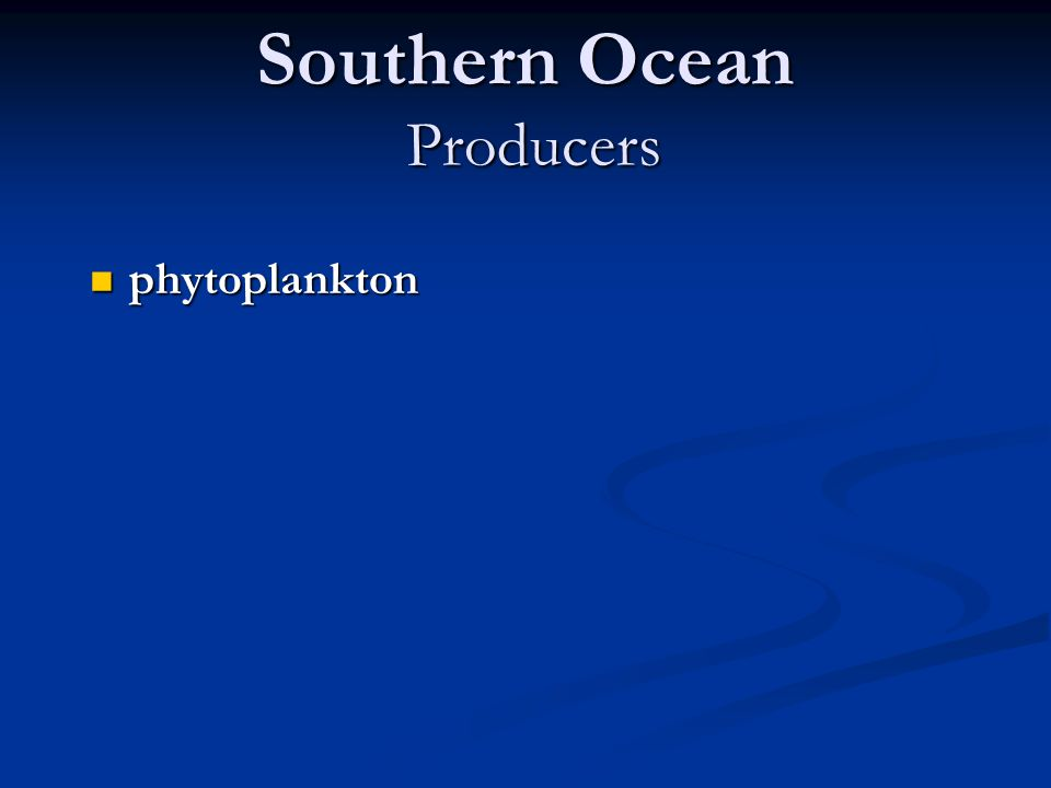 Southern Ocean Producers phytoplankton phytoplankton