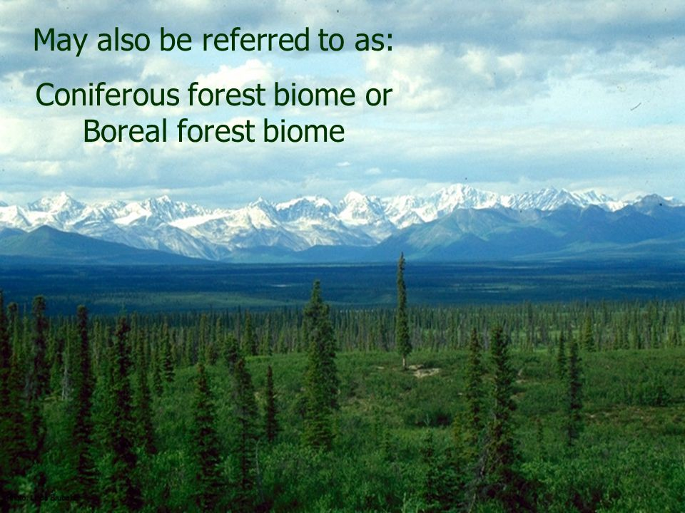 May also be referred to as: Coniferous forest biome or Boreal forest biome