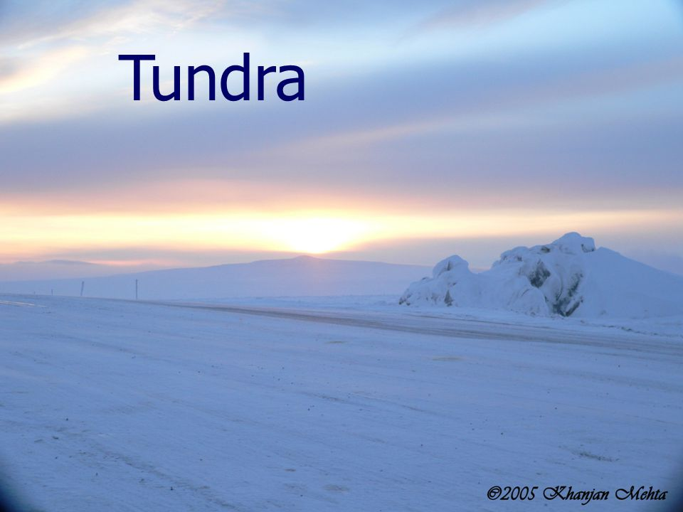The tundra is an extremely cold, dry biome.Most of the soil is frozen all year long.