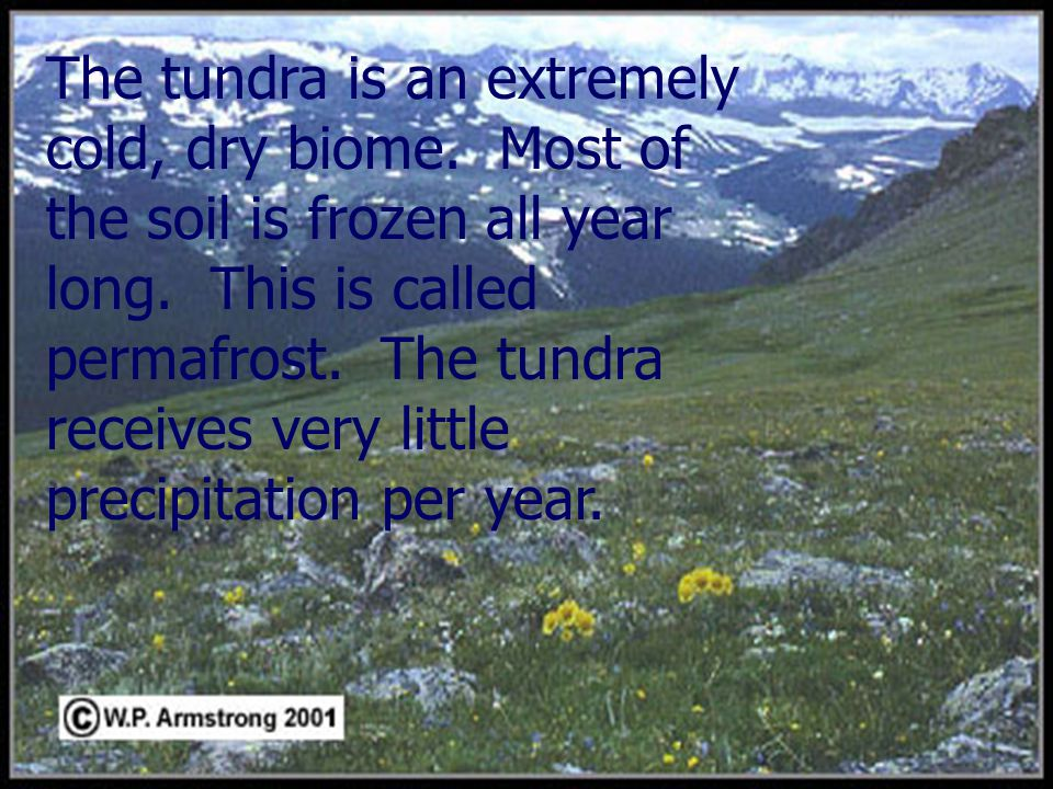 All plants and animals of the tundra have special adaptations for living in this very cold environment.