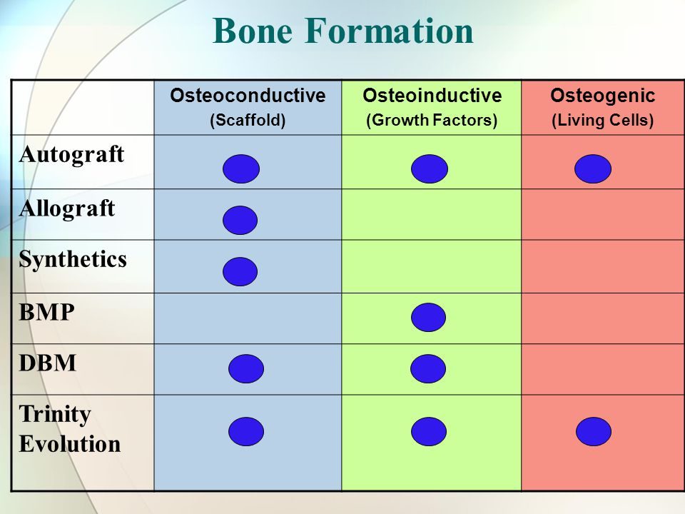 Bone Formation Osteoconductive (Scaffold) Osteoinductive (Growth Factors) Osteogenic (Living Cells) Autograft Allograft Synthetics BMP DBM Trinity Evolution