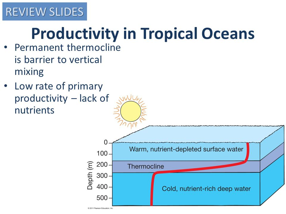 Productivity in Tropical Oceans Permanent thermocline is barrier to vertical mixing Low rate of primary productivity – lack of nutrients REVIEW SLIDES