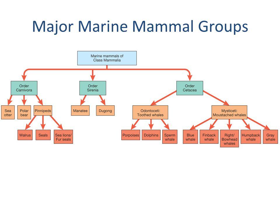 Major Marine Mammal Groups