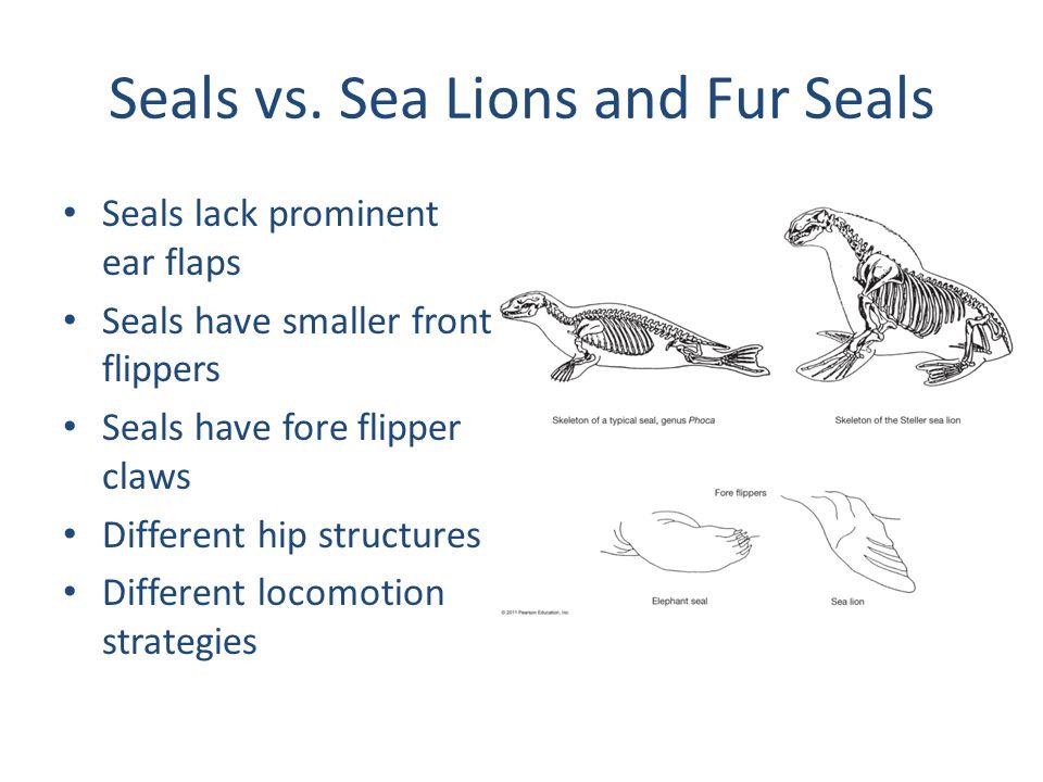 Seals vs.